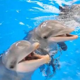 Delfines que participaron en el estudio. Nature.