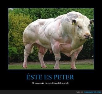 Ejemplo de manipulación genética en un toro