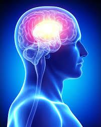 Dios y cerebro